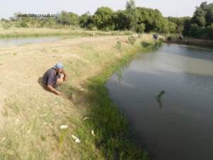 Production of tilapia and catfish fingerlings in Senegal (01)