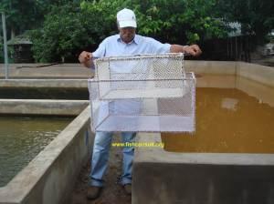 Benin - fish grader (02)
