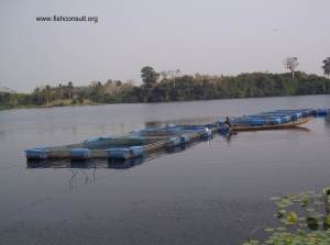 Cage culture of Nile tilapia in Lake Volta (Ghana) 01