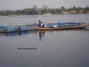 Cage culture of Nile tilapia in Lake Volta (Ghana) 02