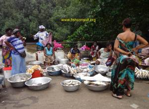 Fish selling in a landing site in Gabon
