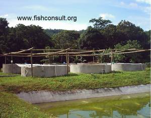 Guatemala - rescure of endagered fish species (01)