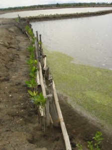 shrimp-seaweed polyculture ponds – Fish Consulting Group