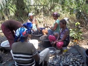 Women in fish processing in Ghana (02)