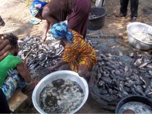 Women in fish processing in Ghana (03)
