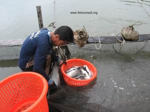Cage culture of seabass in Thailand (02)