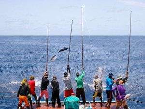Pole and Line tuna fishing in the Maldives