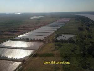 Description and management of a fish farm in Mozambique
