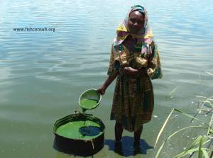 Collection of Spirulina in Lake Chad