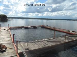 Tilapia cage culture in Zambia (02)