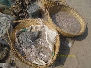Illegal fish size in Buruni