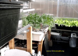 small to medium aquaponics