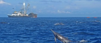 Tuna Persein Commerical Fishing Dolphins