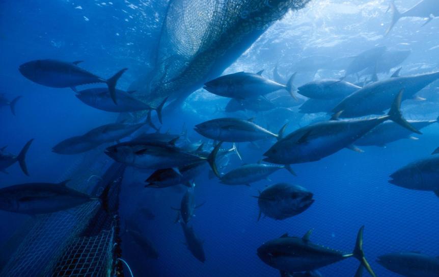 tuna for ticos