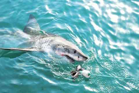 Kayak fishing and sharks