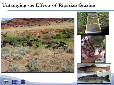 Timing, duration, and frequency of livestock grazing, as well as wildlife browse rates, contribute to the sustainability of riparian and stream ecosystems. Credit: USDA Forest Service