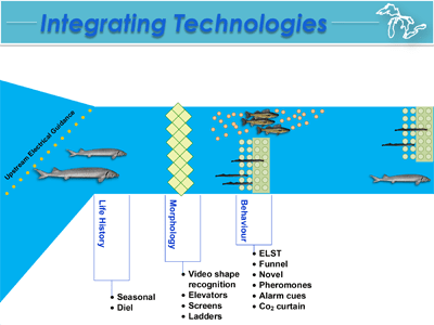 Integrating fish biology and guidance technologies to achieve selective fish passage. Credit: Andrew Muir