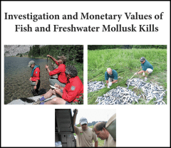 Investigation and Monetary Values of Fish and Freshwater Mollusk Kills image