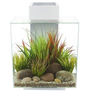 12-Gallon Aquarium