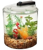 API Betta 360 Degree 1.5-Gallon Kit review
