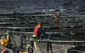 Scottish finfish farming in numbers