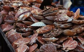 Dispute over Scallop fishing rights