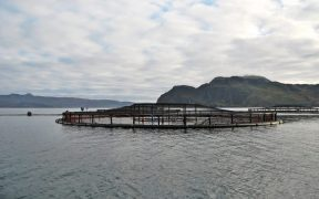 New Study Highlights Importance of Salmon Farming
