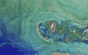 Caspian Sea Sturgeon Ban Extended