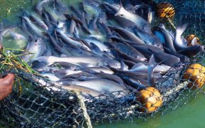 Aquaculture Key to Meeting US Seafood Needs