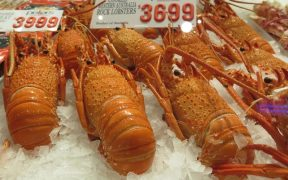 Rock Lobster Fishers Oppose Plan