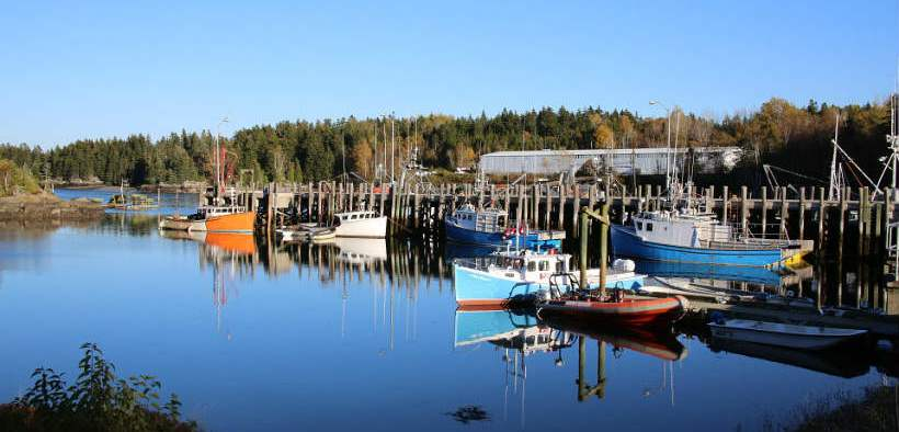 Seafood Mislabelling Persists In Canada's Supply Chain