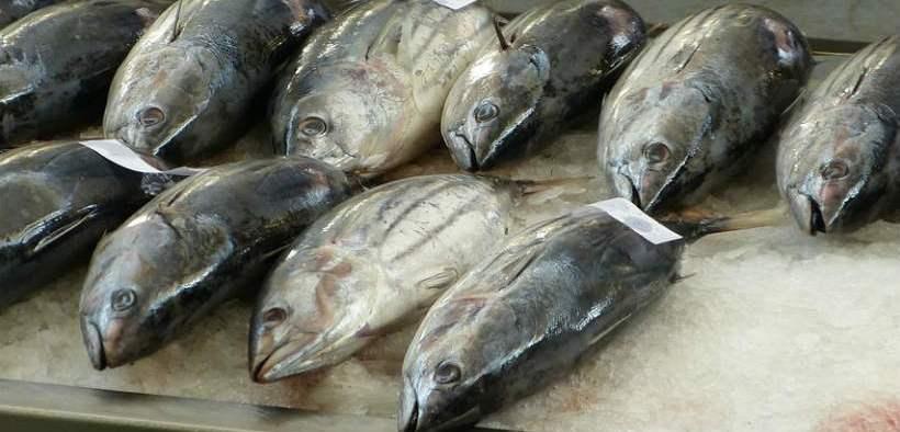 CONTEST TO PIONEER SUSTAINABLE TUNA FISHING
