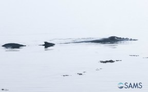 WHALE RETURNS TO OCEAN AFTER SAMS STRANDING