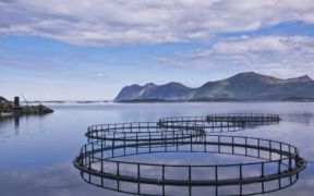AQUACULTURE GROUPINGS ENTER STRATEGIC PARTNERSHIP