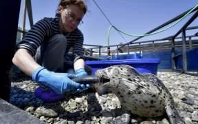 RFC Supports Sea Rehabilitation Centre