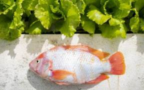BAHAMA COLLEGE OFFERS AQUAPONICS TRAINING