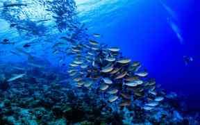 OCEAN CURRENTS BRING GOOD NEWS