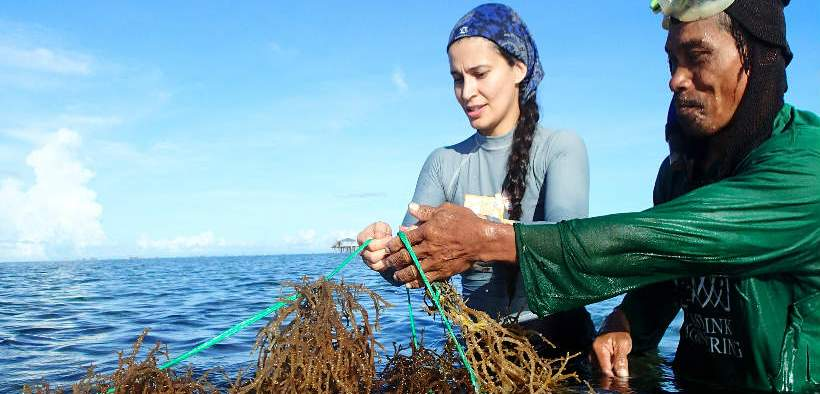 SEAWEED FARMING BIOSECURITY ISSUE
