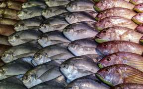 Seafood Expo Global Gets Underway Today