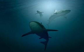 THOUSANDS OF ENDANGERED SHARKS SLAUGHTERED