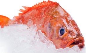 CERTIFICATION FOR ICELANDIC REDFISH FISHERY