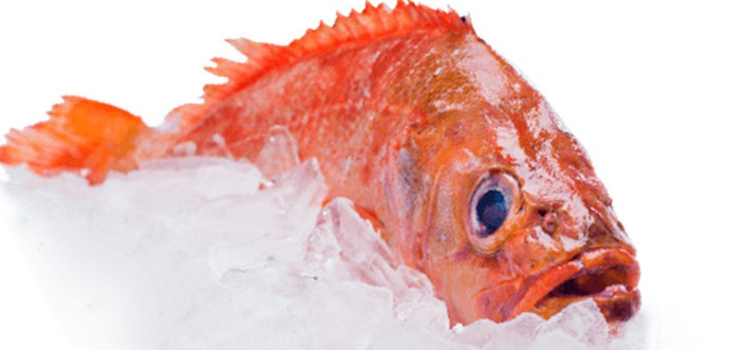 CERTIFICATION FOR ICELANDIC REDFISH FISHERY