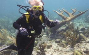 SCIENTISTS RESEARCH CARIBBEAN REEFS