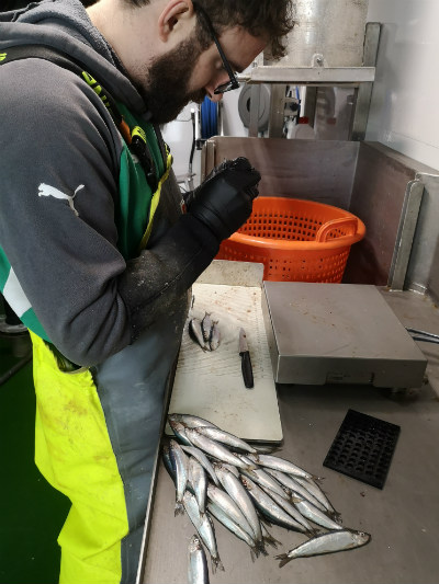FISHERS HAVE KEY ROLE