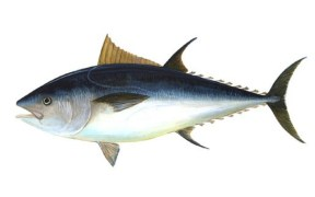 VIETNAM TUNA EXPORTS TO GREECE