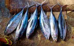ISSF SETS OUT ATLANTIC TUNA
