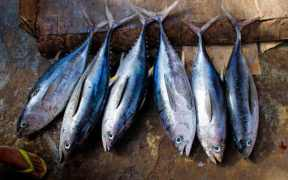 TUNA FISHERY ACHIEVES MSC