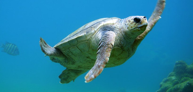 Substantial reduction in Mediterranean turtle bycatch