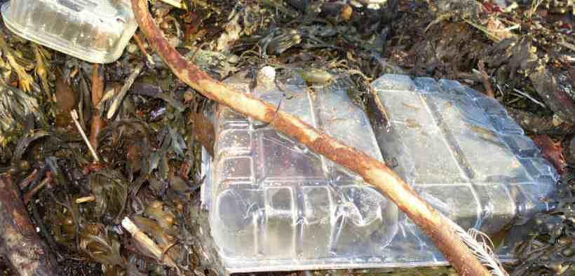 CRABS KILLED BY PLASTIC DEBRIS