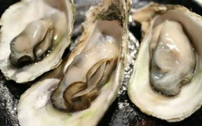 JAPANESE OYSTER FISHERY